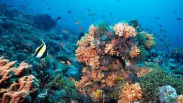 iMarine: un'infrastruttura elettronica per salvare l'ecosistema marino