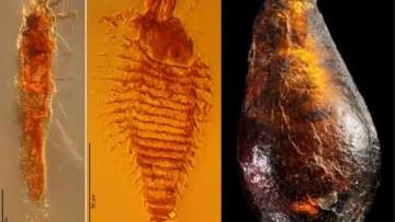 Scoperti nell'ambra gli acari del Triassico