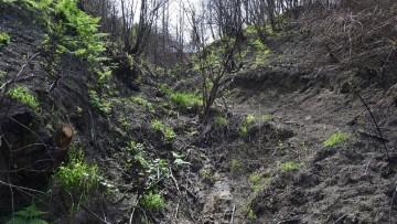 A rischio 4 milioni di ettari di terreni agro-forestali
