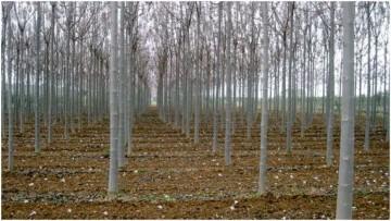 Un albero contro il dissesto idrogeologico