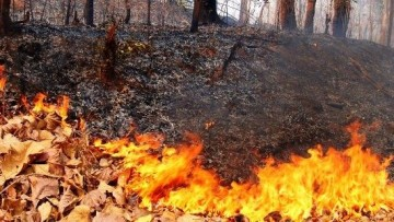 Incendi: sono 1.850 i roghi divampati in Italia, -58%