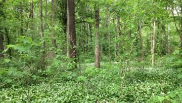 Arriva il 'catasto' delle foreste urbane