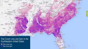 Google contro la deforestazione, arriva il Global Forest Watch