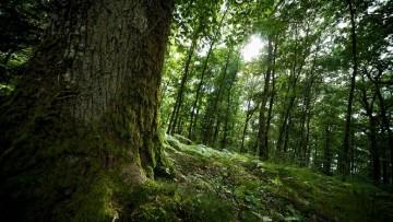 Foreste, le proposte per una politica nazionale