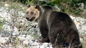 Ispra, il 67% degli habitat in Italia e' in pericolo
