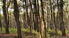 Dall'Inea il quaderno digitale sui boschi italiani
