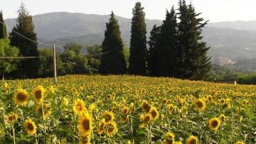 Consumo di suolo, le modifiche dell'Anci alla proposta di legge