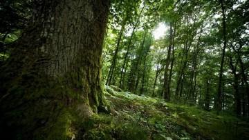 Foreste in crescita in Italia, quasi 11 milioni di ettari