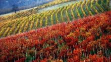 Langhe-Roero e Monferrato: per l'Unesco sono Patrimonio dell'umanita'