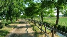 Foreste urbane, le ricerche di Emonfur al termine