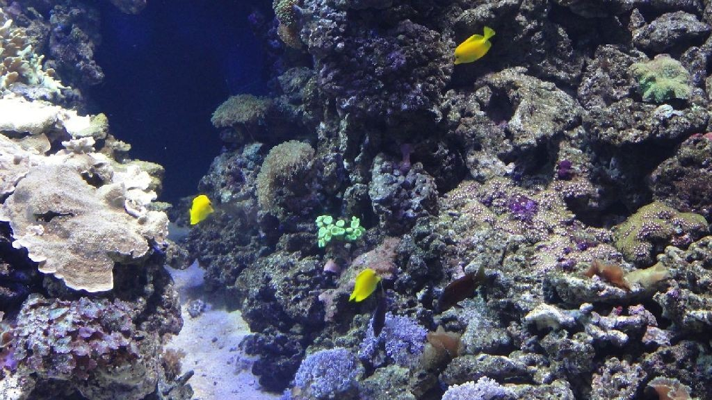 wpid-25747_ecosistemamarino.jpg