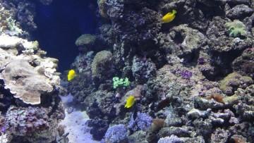 Anche i sistemi marini non comunicanti cambiano in sincronia (o quasi)