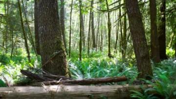I cambiamenti del clima dallo studio degli alberi