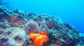 On line le mappe dei fondali oceanici