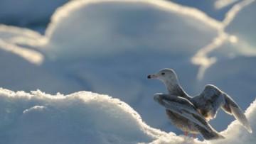 In pericolo vita nell'Artico