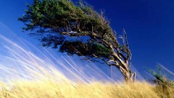 I venti rallentano. Troppi alberi?