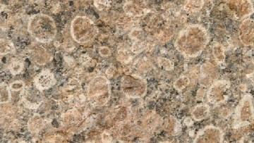 Scoperta una proteina fossile risalente a 400 milioni di anni fa