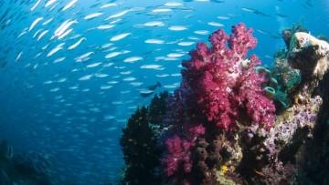 Il 75% delle barriere coralline rischia l'estinzione