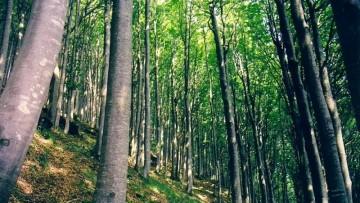Foreste italiane: in aumento ma sempre meno ecologiche